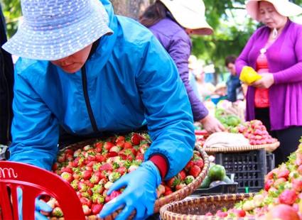 Giá rau củ quả Đà Lạt vẫn ở mức cao kỷ lục